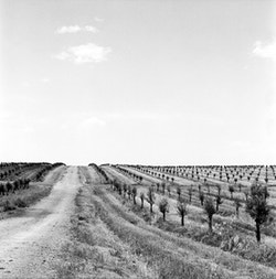 Other view of the olive fields of Herdeiros Passanha